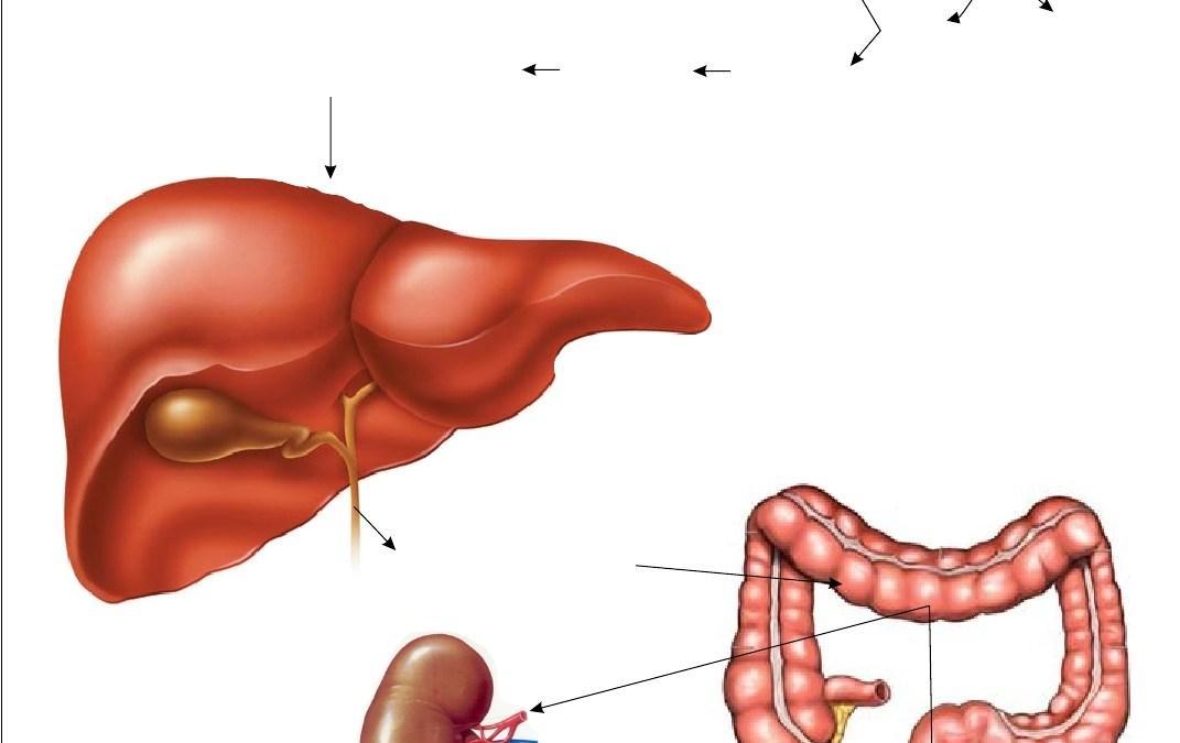 daños de la bilirrubina